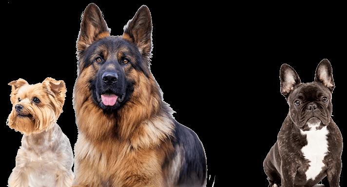 Co to jest Good Doggie Stosowanie i skład